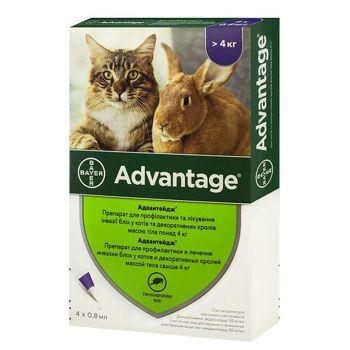 Препарат от блох для кошек и кроликов весом от 4 кг Bayer Advantage 80 4 х 0,8 мл